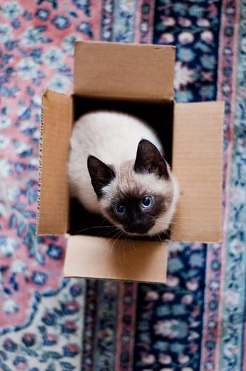 もちろん箱に入るのも大好き!