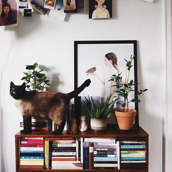 アネットさんの写真の多くは、何でもない日常の生活を捉えたもの。ですが、シンプルな背景と光のバランス、そして猫たちの存在感によって、とても印象的な写真に仕上がっています。