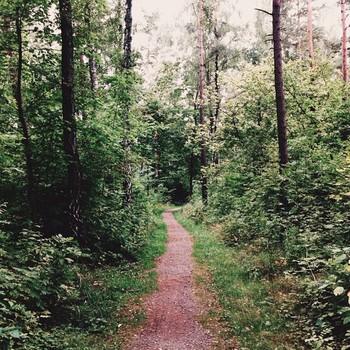 森の奥へと続く一本道。まるで童話の中の1ページのような風景。