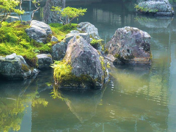 水辺の岩を覆う苔。 早朝、早い時間に訪れたい場所です。