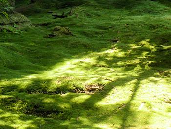 苔に映った木の幹と枝が、まるで影絵のように美しい模様を描きだします。