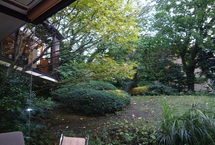 本来は2階の住居からの眺めを想定して作られた庭とのことですが、それは50年あまり昔のこと。お店から見上げる位置にある深い木立は、春は桜や春もみじ、秋は紅葉と四季の彩りがとても素敵。いつまでも守り継いでほしいものです。
