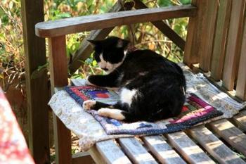 近所の飼い猫ちゃんが遊びにやってきてはいつもいます(笑)。 まるでターシャの愛猫片目のミノーの様なのです。