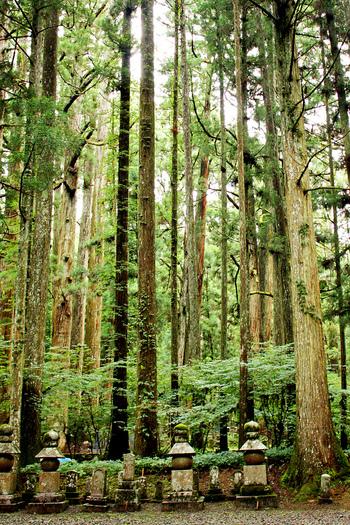 杉の木漏れ日の中、無数ともいえる苔むした供養塔が立ち並びます。静寂の世界が広がり、まさに聖域といった雰囲気。高野山を象徴する光景のひとつです。