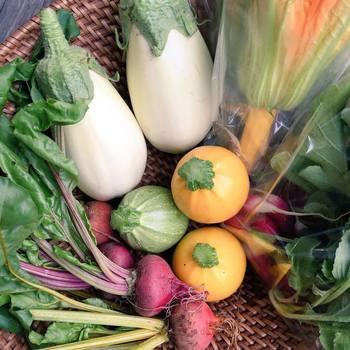 無農薬や減農薬で作られているこだわりの野菜たち。季節に応じて新鮮な野菜が各地から直接入荷されてきます。こちらは北海道美瑛町で採れた西洋野菜たち。
