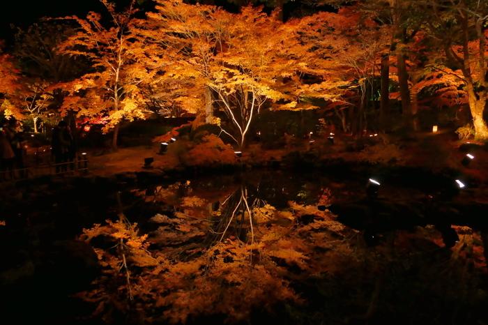 例年11月頃に見頃を迎える、松島の紅葉も素晴らしいです。こちらは、円通院のライトアップ。水鏡に映える紅葉が幻想的で美しいですね。