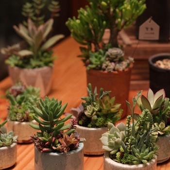 アトリエ季色による多肉植物の展示販売は2015年7月に開催されました。期間中には多肉植物の寄せ植えワークショップも。暮らしを豊かにするような展示販売や、クリエイティブなイベントなど、色々なジャンルに触れることができます。