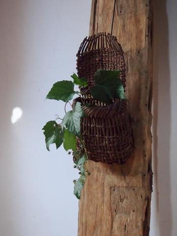 ツル植物を籠に生けて、趣のある柱へ。オブジェのようで、思わず見惚れてしまいます。