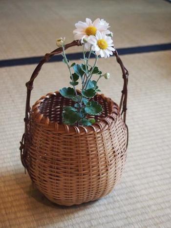 菊は、籠の中でまるで小さな宝物のようにほっこりと咲いています。
