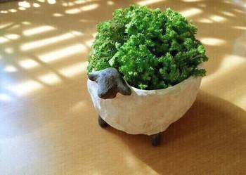 ひつじの植木鉢「もりひつじ」は、お好きな植物を植えかえることができます。こちらのようにボリュームのある植物を植えると丸みがでていいかもしれません。