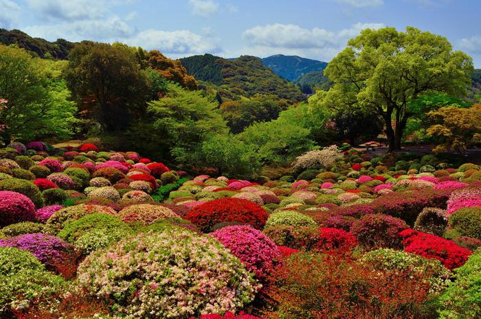色とりどりのつつじが咲き乱れる、絵に描いたかのような楽園。開花時期の4月が見頃です。
