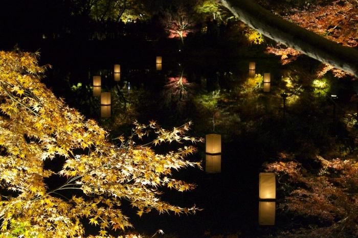 さらに秋には一転して燃えるような紅葉で彩られます。ライトアップされた紅葉はとても風流で幻想的。