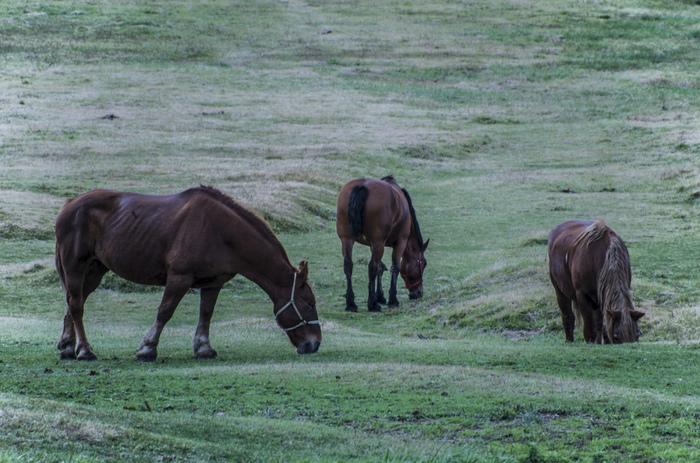 放牧された馬が見られることもあるのだとか。