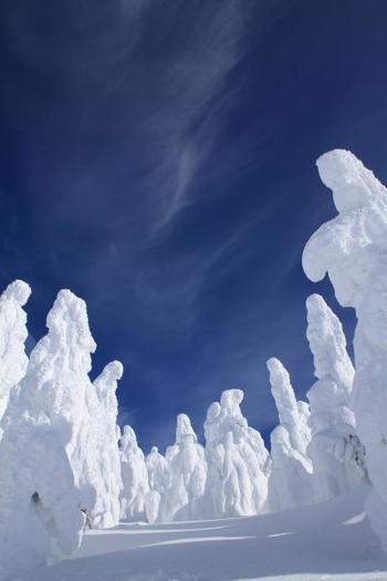 写真は、山形県・蔵王の樹氷。氷の花が咲いたような繊細な樹氷もきれいですが、いまにも動き出しそうな力強い樹氷も面白いですね。