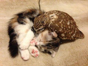 時には丸くなってふたりで眠ることも・・・。