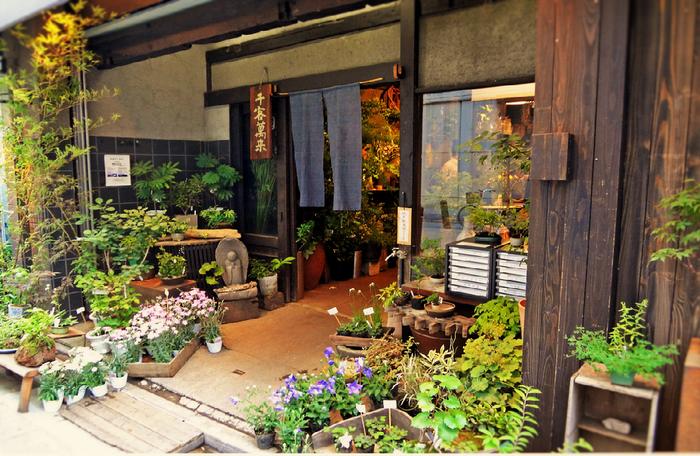 """""""花+カフェ""""の組み合わせは少なくありませんが、こちらは、野草の専門店。茶房は2階にあります。"""