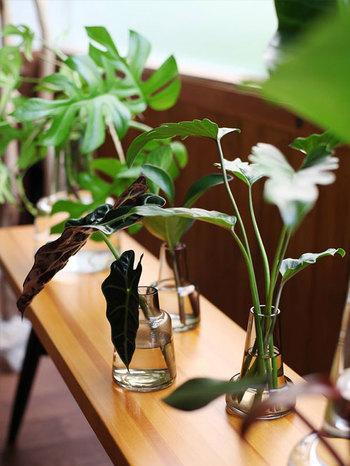 花だけではなく、観葉植物を生けても。どんな植物にも合うのは、デザインの力があるからゆえ。ダイニング、書斎、リビング、あなただったらどこに飾りますか?