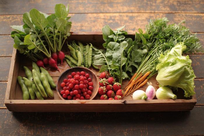 夏はズッキーニやトマト・ピーマン・オクラやナス・キュウリ、秋はルッコラやかぶ菜・ベビー人参といった、季節に応じたいろいろな種類の旬の野菜を栽培しています。野菜や果物は、採れたてのものをおいしい旬の時期にいただくのがなによりのごちそう♪