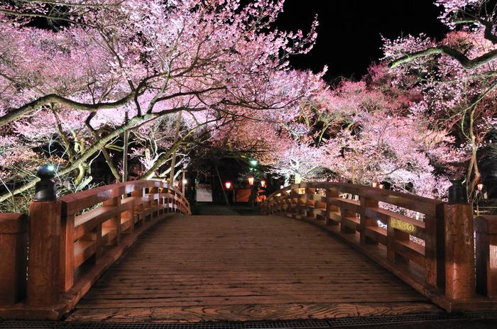 高遠城址公園の桜は、「天下一の桜」と呼ばれるほど全国的に有名です。昼の姿も見事ですが、今回は夜桜に注目してみました。ライトアップされた桜は、神々しさすら感じられます。