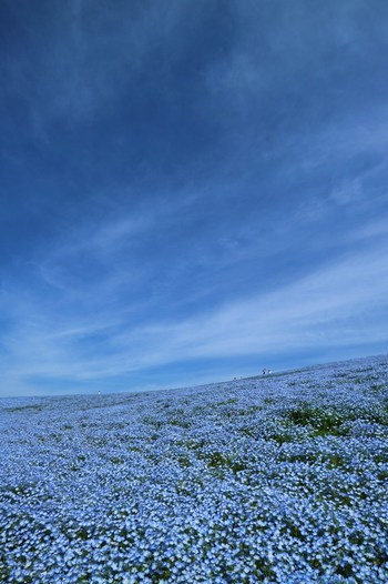 一面のブルーの景色。思わず息を飲むような絶景です。ここはどこ?と確認してしまいそうになりますね。
