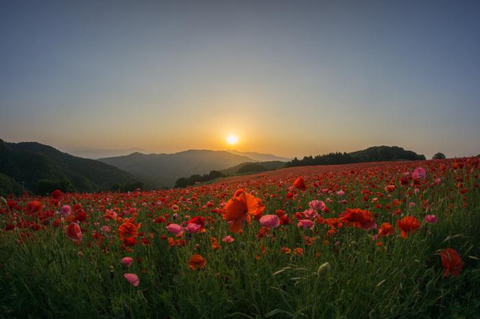 夕日に照らされて、天国のような風景に。時間を忘れて魅入ってしまいそう。
