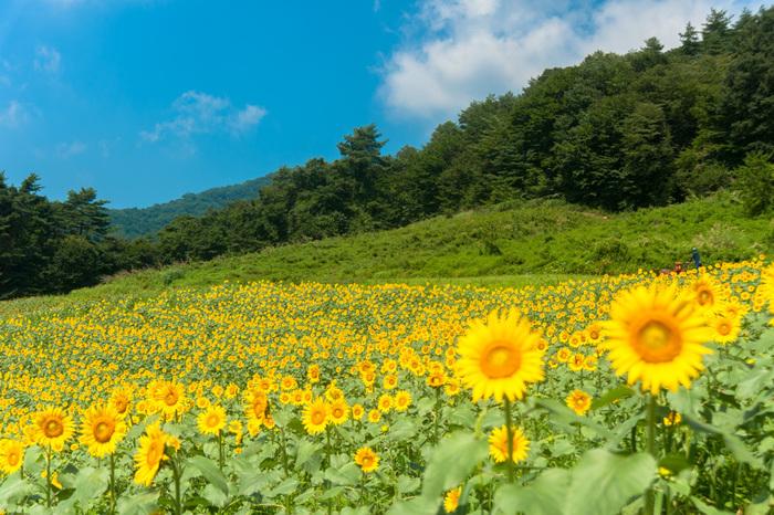 なんて鮮やかな風景でしょう。暑さも忘れて、いつまでも見ていたいような元気の出る景色ですね。