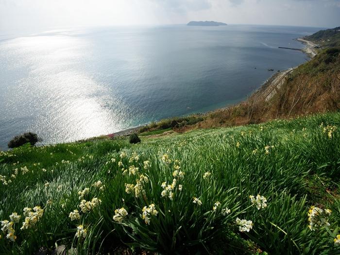 水仙が咲き乱れる丘と海を一望できる絶景スポット。爽やかな風を感じながら散策したいですね。