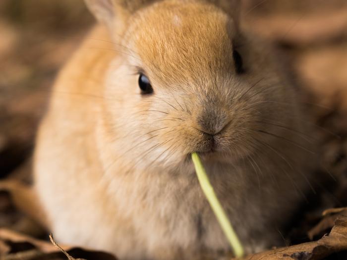 食べている間はじっとしているので、触らせてくれる場合もあります。モグモグしている時の表情が可愛くて、ずっと見ていられますよ。