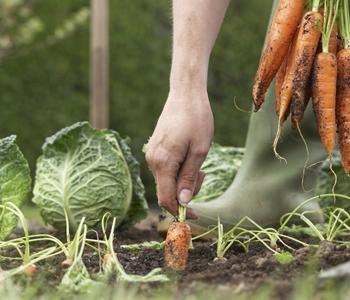 〈おかず畑〉のお惣菜で使われている素材は、産地や採取時期だけでなく、サイズや形に至るまで厳選しているそうです。だから見た目にも美しく、器に盛り付けると絵になるんですね。しかも「和食の基本を大切に、手間を惜しまず丁寧につくる」ことを心がけ、出汁にもこだわっているそうです。まるで手作り!素朴で優しい家庭の味に、きっとそう感じるはず。