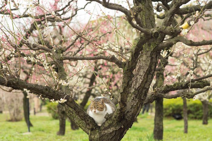 梅の香りに誘われて、こんな珍客も…!