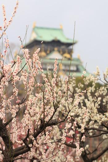 100品種、1000本以上もの梅が植えられている、別名「大阪城梅林」