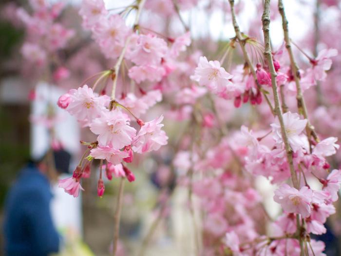 京都へ足を運ぶのなら、ぜひ「上賀茂神社」も訪れて下さい。穏やかな川辺の景色と京風情を満喫できます。