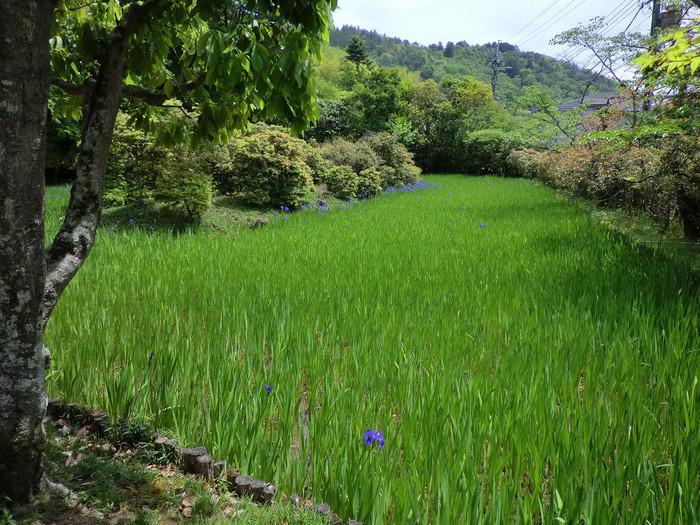 """「大田神社」は""""杜若(かきつばた)""""で良く知られています。神社の東側の「大田の沢」では、国の天然記念物に指定された「かきつばた群落」を眺めることが出来ます。"""