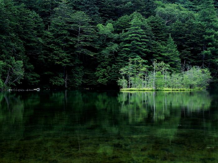 ウォーキングコースを奥へと進むと現れる明神池は、なんとも神秘的な雰囲気です。雨の日の早朝、朝もやに包まれる光景は特に幻想的なんだとか。