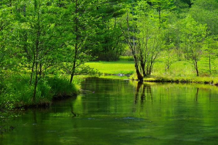 いろいろな植物が自生し、まるで自然の箱庭のような静かな空間が広がる田代池。新緑の季節には、水面までも鮮やかな緑に。