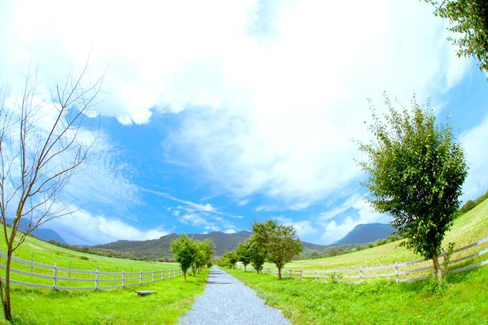 どこまでも続く一本道をのんびりとお散歩するのも素敵ですね。