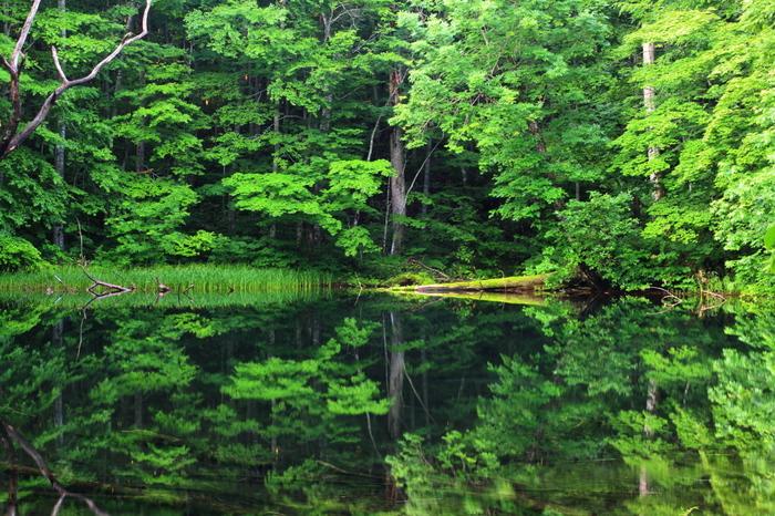 緑豊かで静寂な空気に包まれる月沼。澄んだ空気で深呼吸してみたくなります。