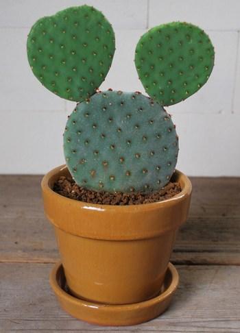 安定感もあるので、大きめの植物もOK!何を植えようか、楽しみになりますね♪
