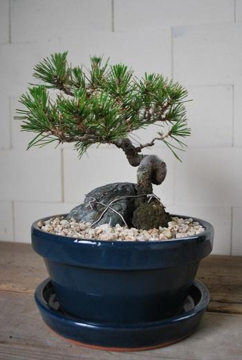 「Shallow pot(シャローポット)」  高さが低めなので、盆栽など和の植物にピッタリです。落ち着いた雰囲気が印象的。4・6号の2サイズ。