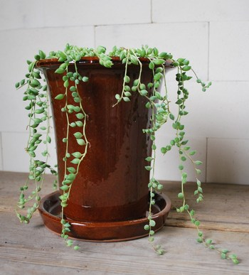 「Slim pot(スリムポット)」  背の高さがクールな雰囲気を持つSlim pot。ツルがのびるポトスなどと相性がよさそうですね。4・6・7号の3サイズ。