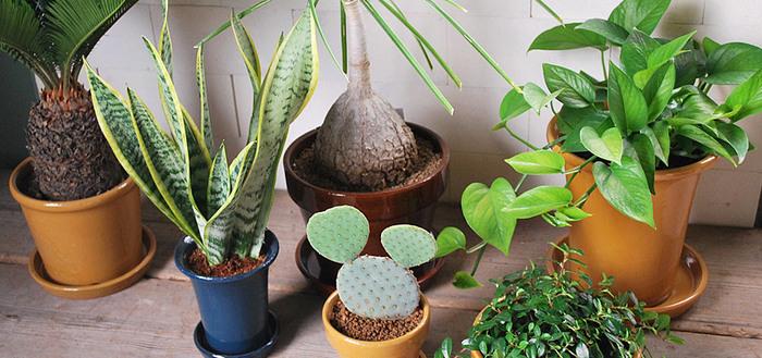 ずっと使ってもらえる植木鉢を。「井澤製陶」のガーデニングアイテム