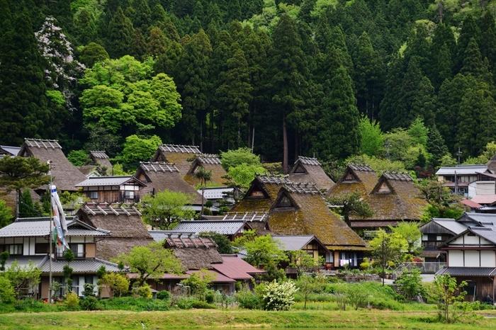 美山町には、実に250軒以上もの茅葺屋根の民家が現存しています。その中でも、由良川の北側に位置する知井地区の「かやぶきの里」と呼ばれる集落には、多くの茅葺屋根の民家が軒を連ねています。日本の原風景を色濃く残す茅葺屋根の民家が、背後に迫る森の美しさを引き立てており、国の重要伝統的建造物群保存地区に指定されています。