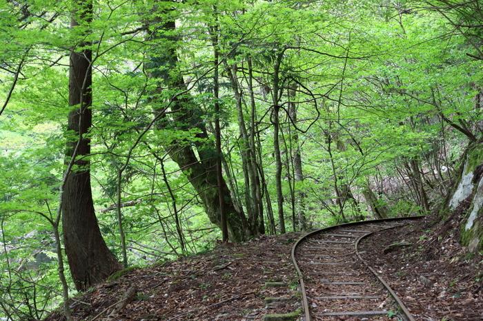 昼間でさえも薄暗い原生林の中は、幽玄閑寂とした神秘的な雰囲気が漂っています。