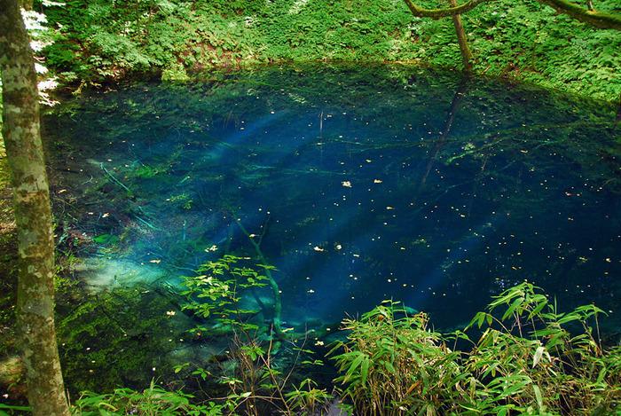 白神山地の一角に点在する十二湖の中に、まるでブルーのインクをたらしたかのように鮮やかな青池があります。信じられないほど濃い青色をしており、自然の神秘に思わず息を飲む光景です。
