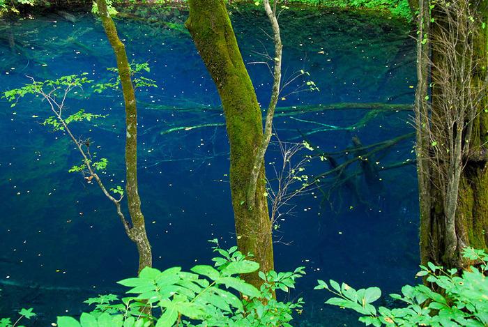 正午には透明度の高い澄んだブルー、午後には深い瑠璃色と、青い色味は時間帯によって微妙に変化します。