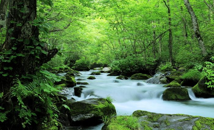 十和田湖から焼山まで、約14kmにわたる清流です。渓流に沿って作られた歩道を進めば、刻々と変化する渓流や四季折々の草花の自然美を堪能できることでしょう。