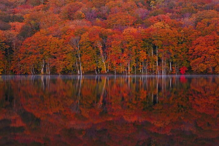 七沼の中で最も大きな蔦沼。紅葉のピークになると、山の紅葉が水面に映り込み、湖面を真っ赤に染め上げます。全国からカメラマンが集まる人気の撮影スポットでもあります。