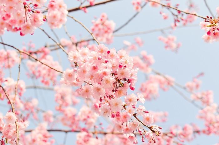 草花が芽吹きあらゆる生命が一気に活動をはじめる春は、気分もわくわく♪外にお出かけしたくなる季節ですよね!桜をはじめ、菜の花やチューリップなどお花を眺める『お花見』も春の楽しみの一つではないでしょうか。そんな春はぽかぽかとした陽気の晴れ渡る空の下で、春の花々を眺めながら『お花見女子会』をしてみませんか?
