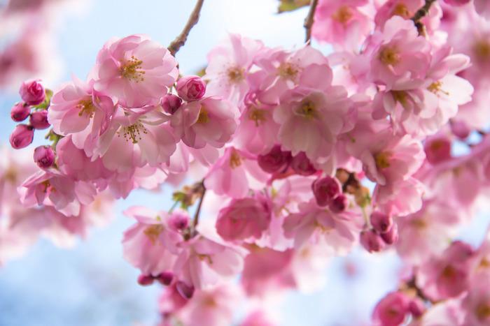 寒くて背を丸めながら歩いていた冬が終わり、やっと春がやってきましたね。あたたかな陽気のなかで咲き乱れる満開の桜の花を眺めていると、日本に生まれて良かった~と思えます。