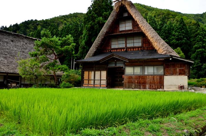 訪れる者の心を和ませる不思議な魅力を持った菅沼集落内を散策してみましょう。合掌造りの家、水田、あぜ道、集落を包む山々が融和し、まるで日本昔話の世界に迷い込んだような気分を味わうことができます。